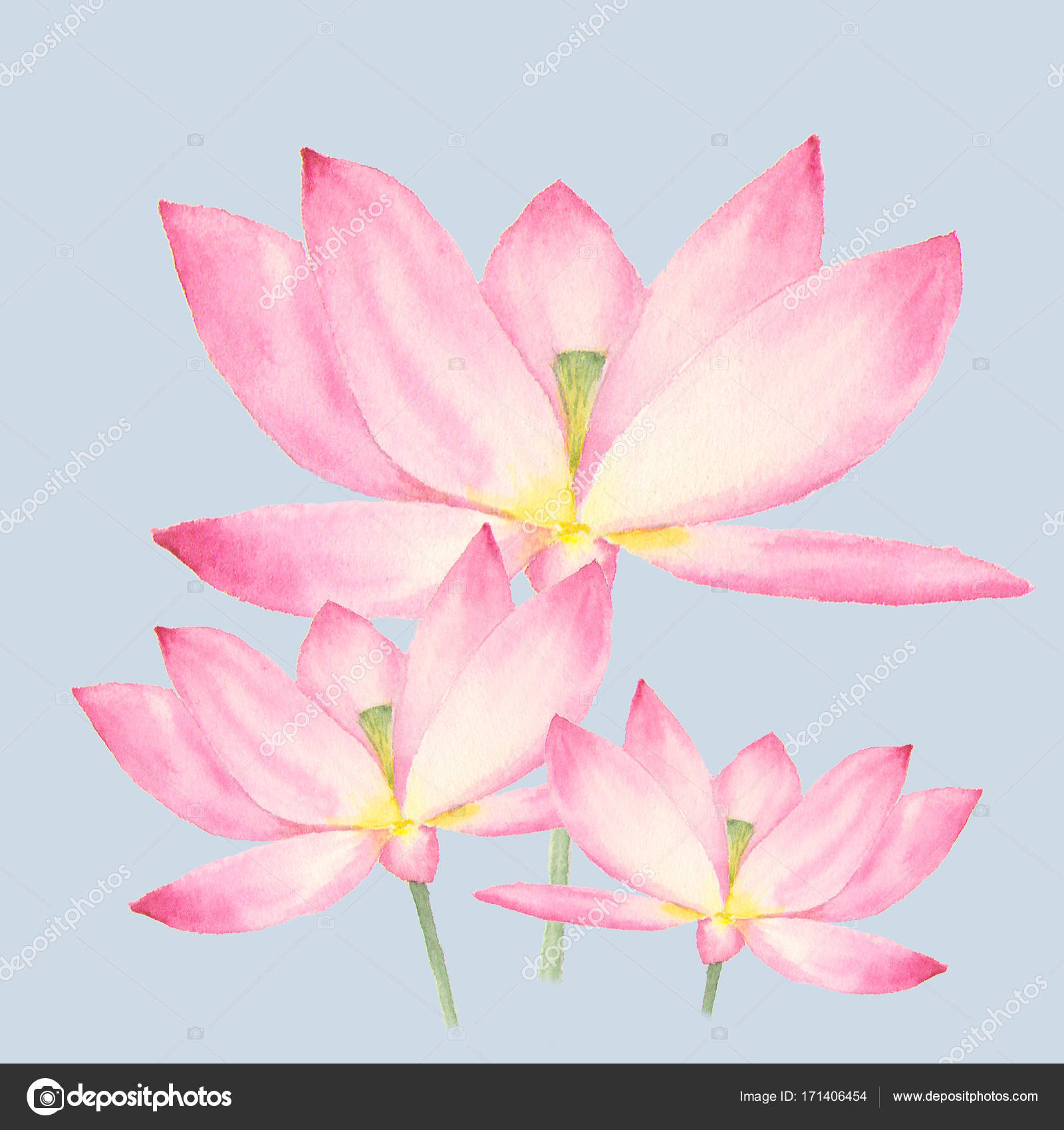 Botanical Watercolor Illustration Of Lotus Flowers On Blue