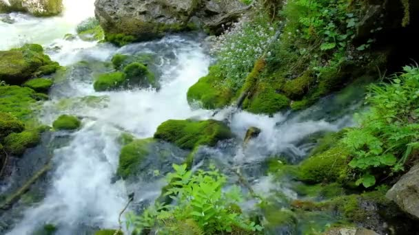 streams of pure mountain water run through the rocks of the waterfall overgrown with bright green moss and flowers