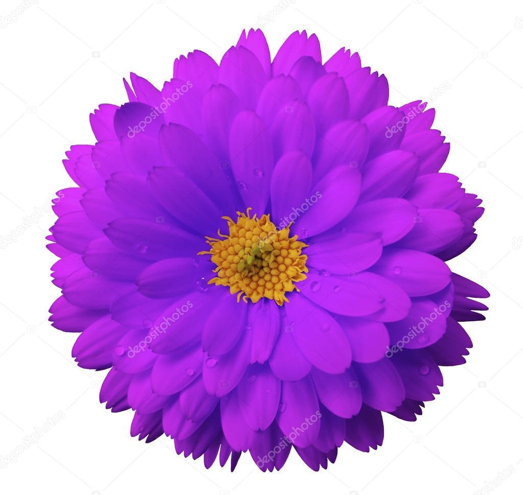 Im genes flores de colores para imprimir y recortar - Dibujos en colores para imprimir ...