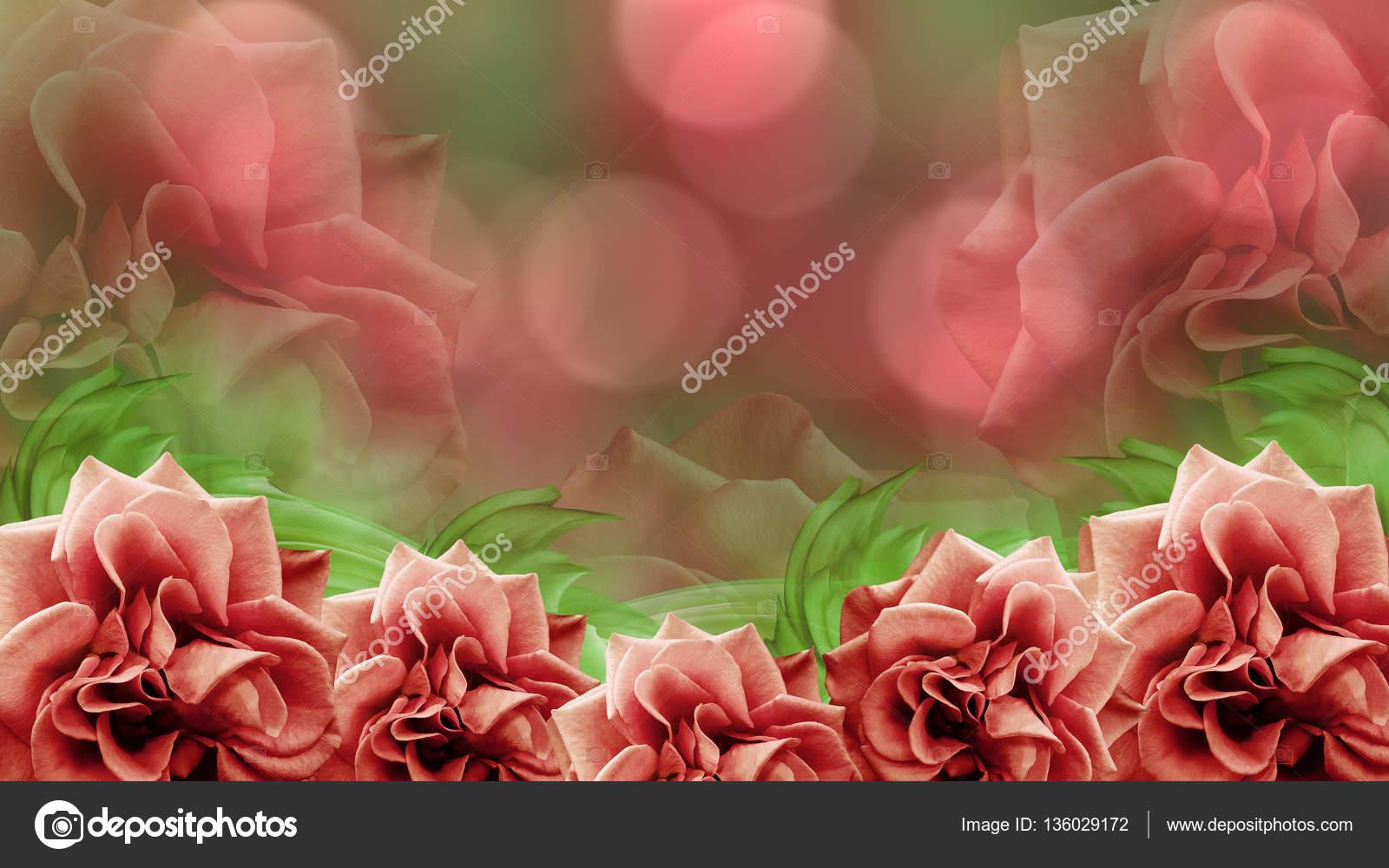 Fondo De Pantalla Flores Rosas: Fotos De Flores Rosas Paisajes Para Fondos De Pantalla