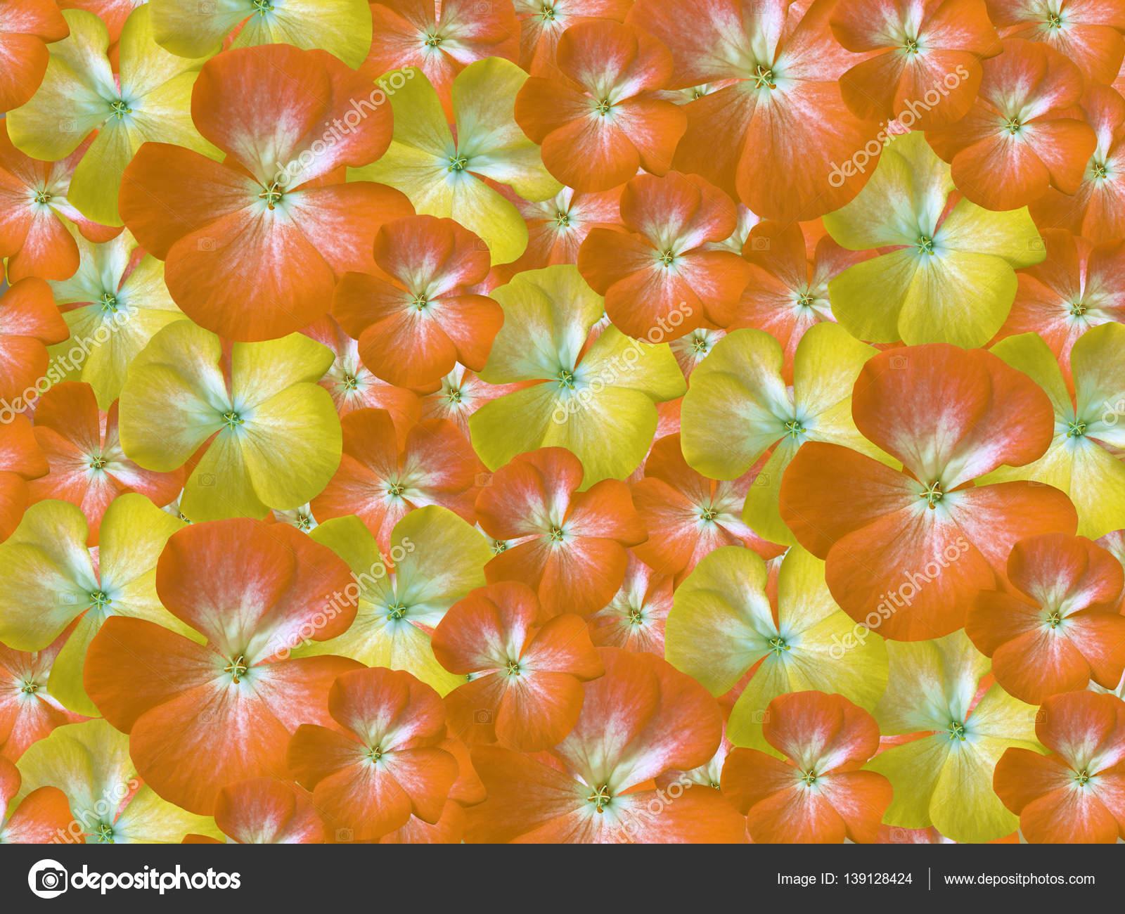 Yellow Orange White Flowers Geranium Floral Background Background