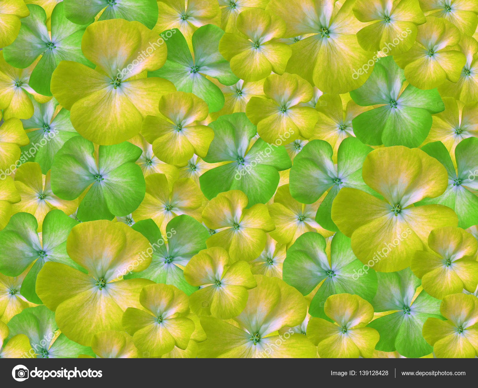 Yellow Green White Flowers Geranium Floral Background Background