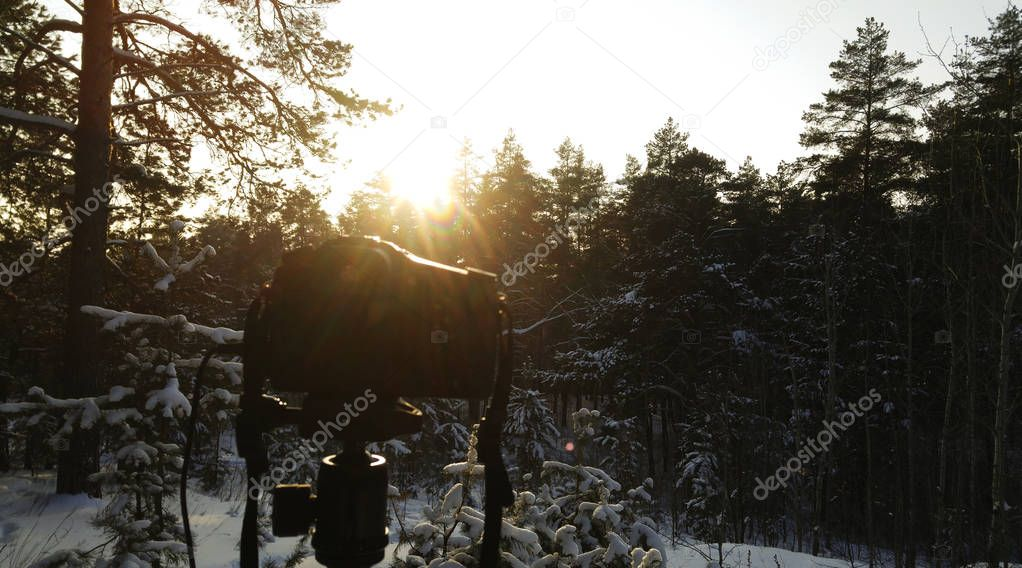 Winter background.  winter forest. Sunny winter day.  The camera is in the forest.