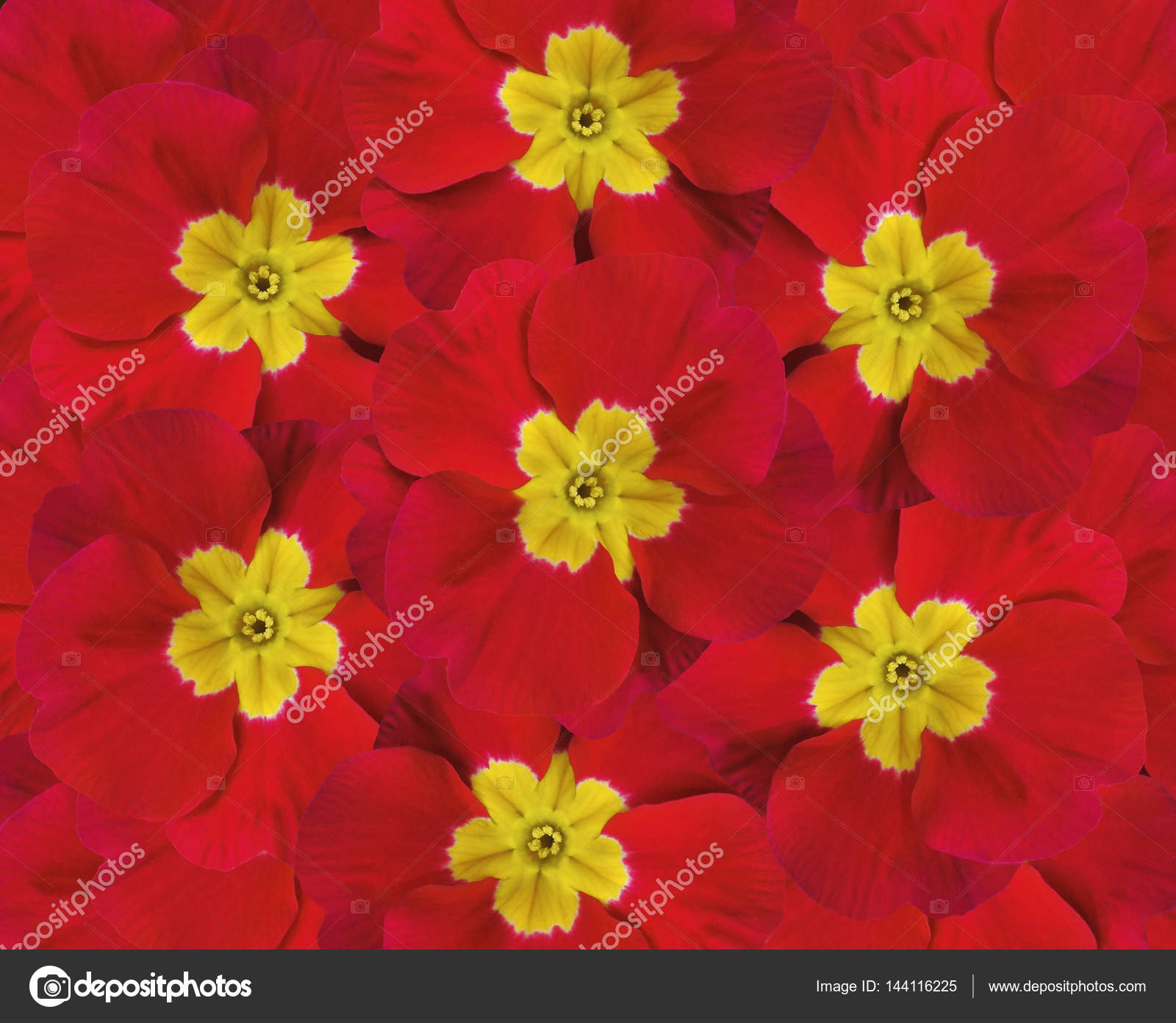 Flowers Red Violets Five Violets With A Yellow Center Floral