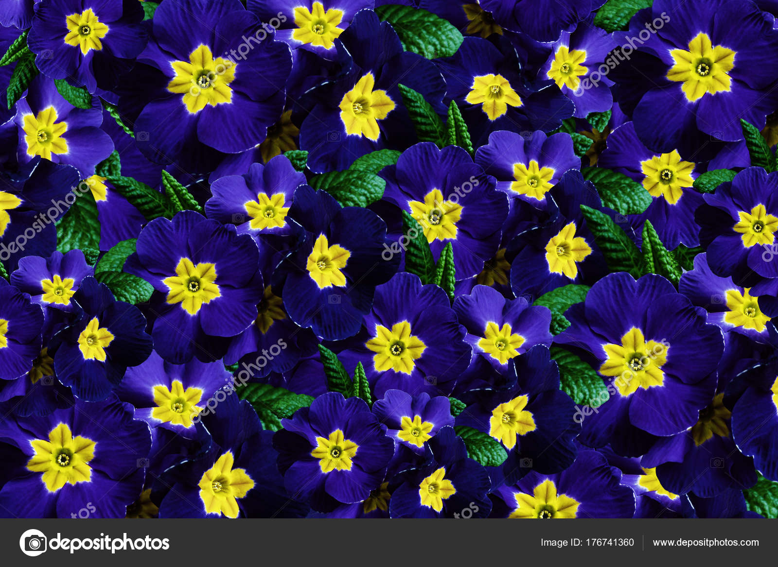 Flowers Background Flowers Blue Violets Much Violets Yellow Center