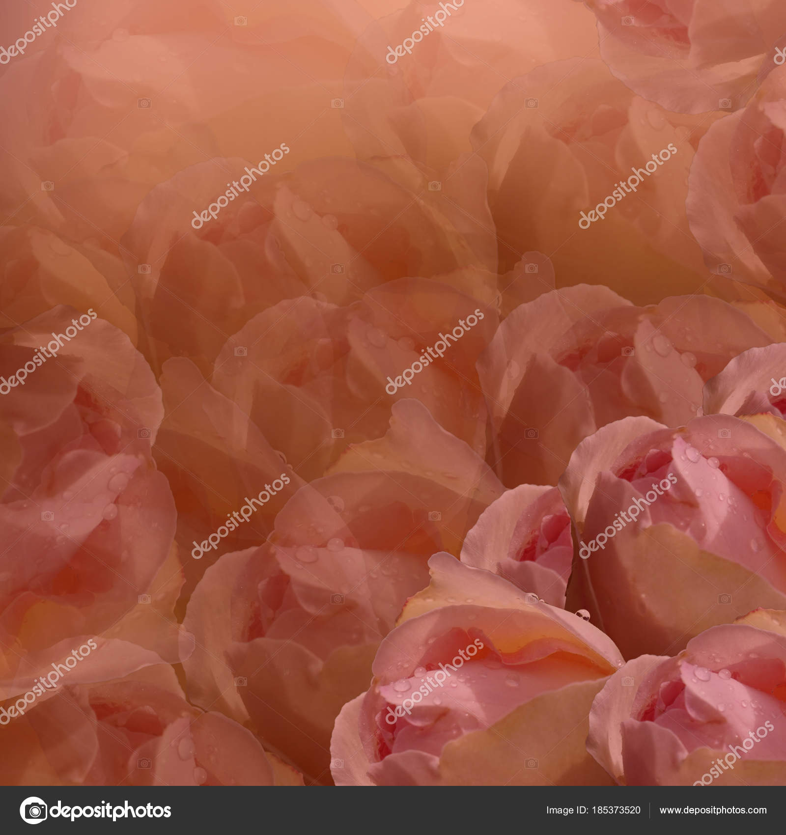 Floral Background Flowers Red Background Light Pink Flowers Roses