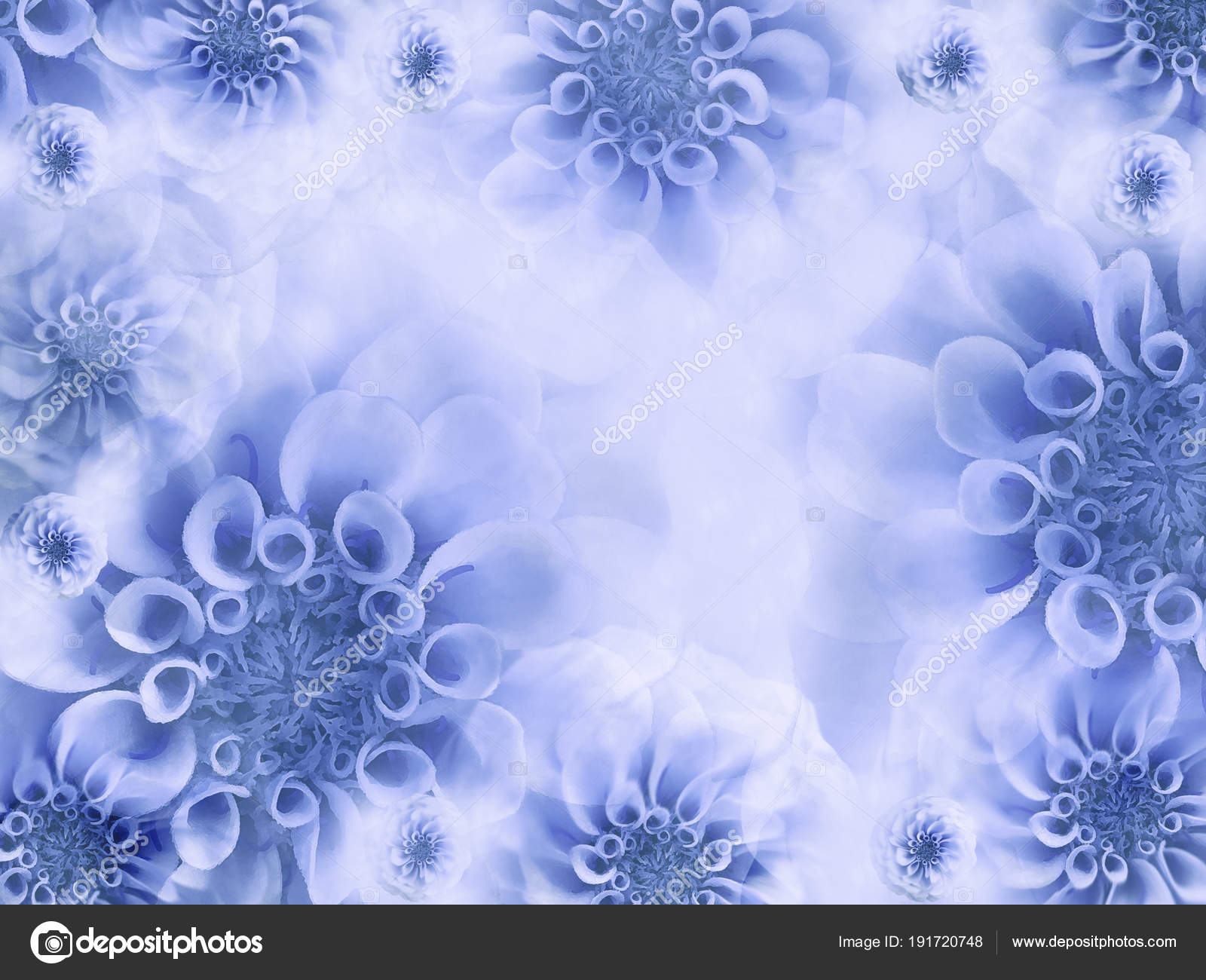 Floral White Blue Beautiful Background Wallpapers Light Blue Flowers