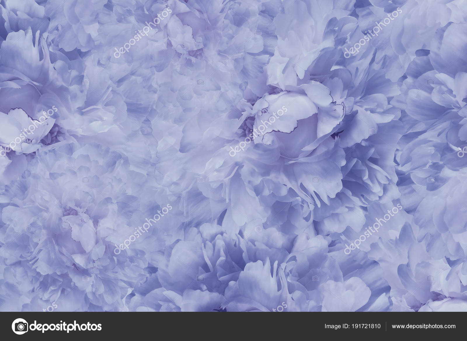 Floral Blue White Beautiful Background Wallpapers Flowers Light Blue