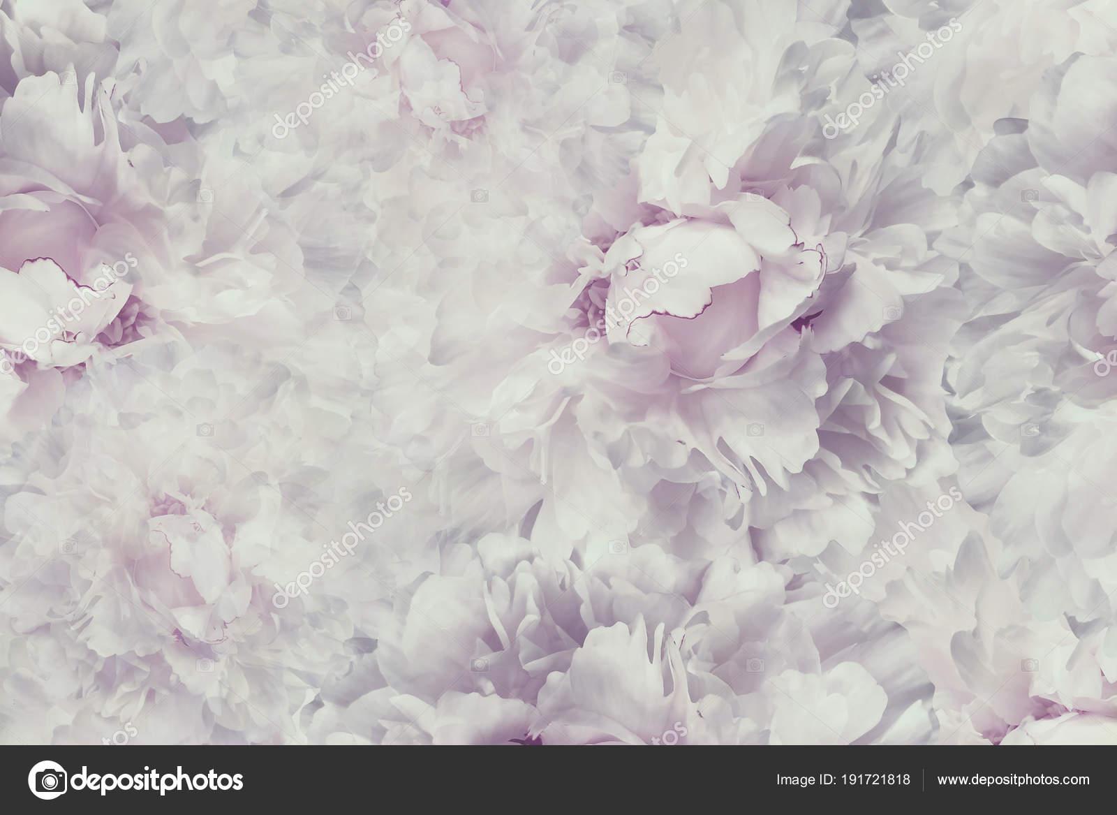 Hermosas Flores Blancas Wallpaper Hd Fondos De Pantalla Gratis: Fondos De Pantalla De Flores Vintage