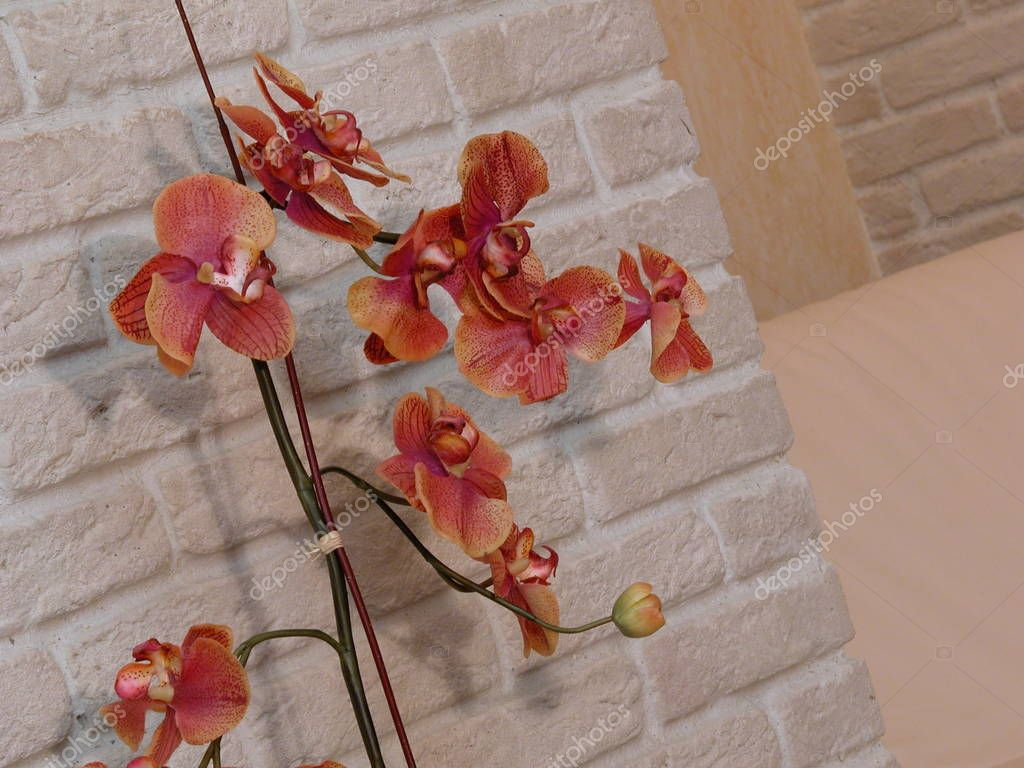 Orange orchid on brick wall backgroung