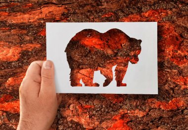 Man, flora and fauna. A hand holds a paper stencil of a bear against the background of a tree bark.