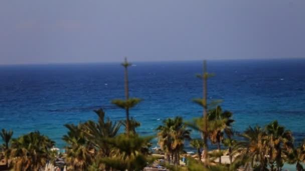 Krásné palmy a tropického moře