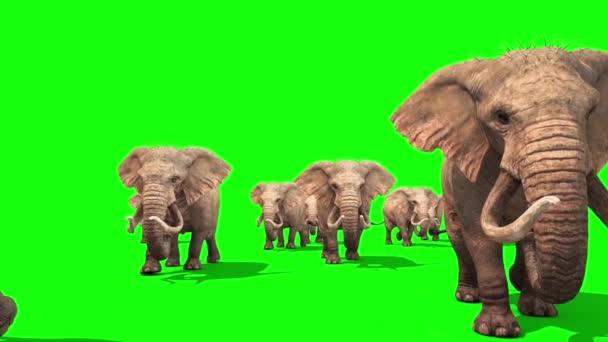 Stádo slonů chůze přední zelené obrazovky 3d rendrování animací