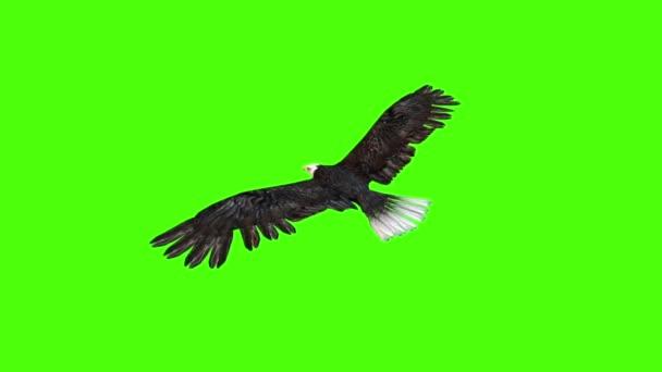 American Eagle kúszik vissza zöld képernyő 3d vakolatok animációk