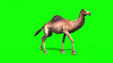 greenscreen stock videos royalty free greenscreen footages