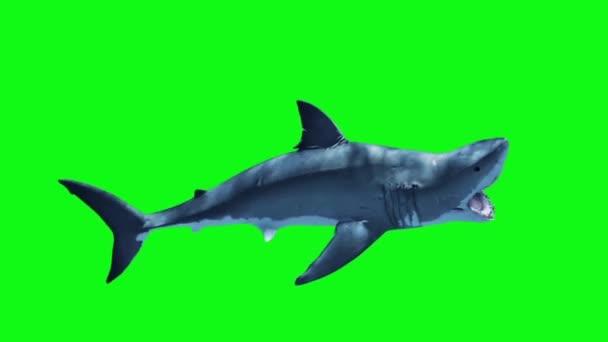 Fehér cápa támadás hurok oldalán zöld képernyő 3d megjelenítő animáció