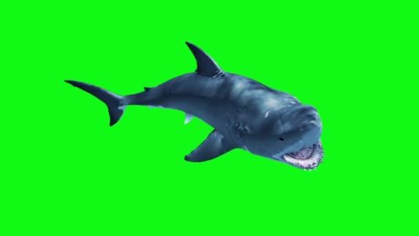Fehér cápa támadás hurok zöld képernyő 3d megjelenítő animáció