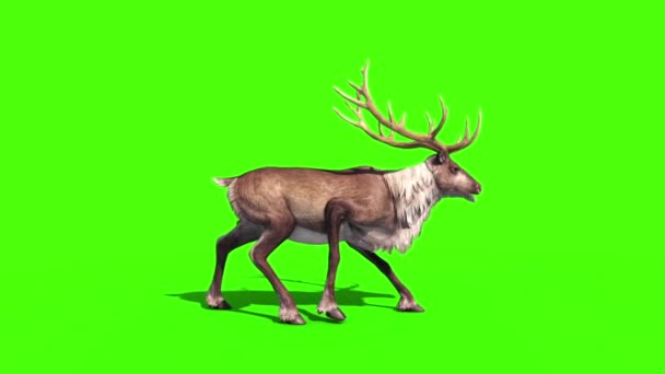Animal Reindeer Dies Green Screen 3D Rendering Animation