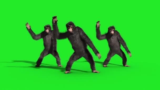 Csoport csimpánz House Dance táncos zöld képernyő 3d megjelenítő animáció állatok