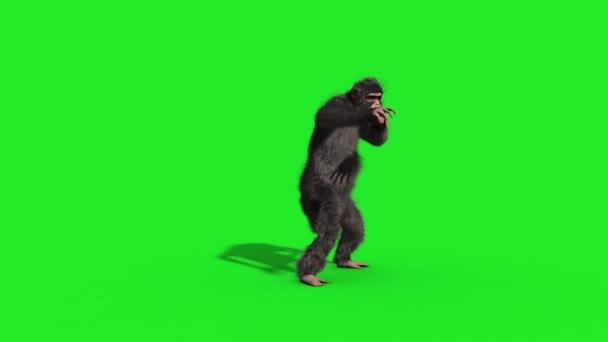 Chimpanzee House Dance Dancer Green Screen 3D Rendering Animation Animals