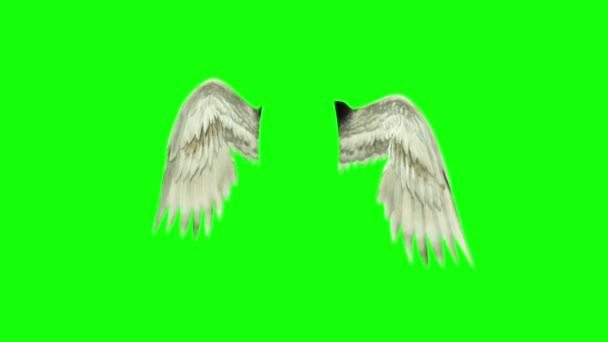 Angels ptáky bílá křídly 3d vykreslování zelená obrazovka