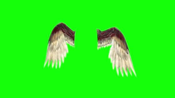 Angels Birds Wings Plumage Flapping 3D Rendering Green Screen