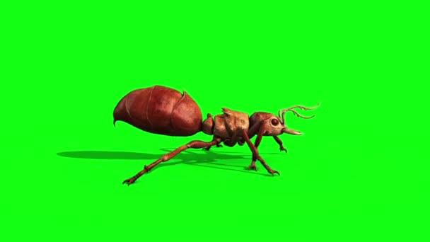 Hangya rovar Runcycle oldalán zöld képernyő 3d megjelenítő animáció