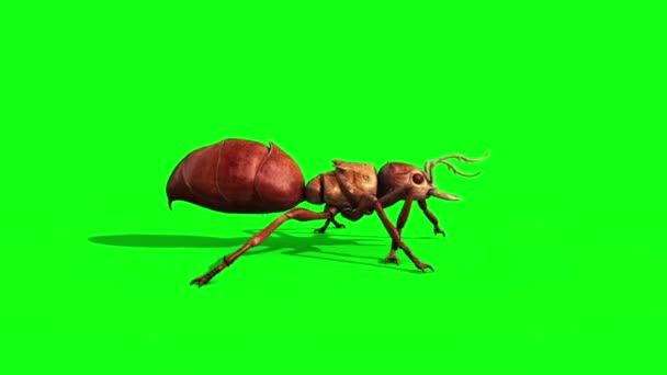 Ant Insect Walkcycle Side Green Screen 3D Rendering Animation