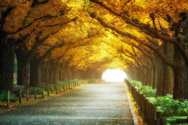 Beautiful Road Path under Trees Arch in Autumn