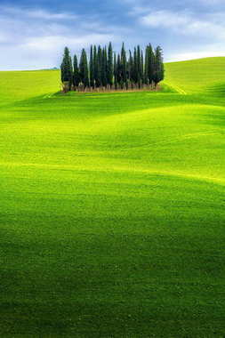 Green hills landscape under blue sky with cypress trees in countryside of Tuscany in Italy . Spring and summer nature background . stock vector