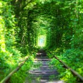 Famous 'Tunnel of Love' in Ukraine