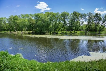Photo for Marshy lake in the countryside - Royalty Free Image