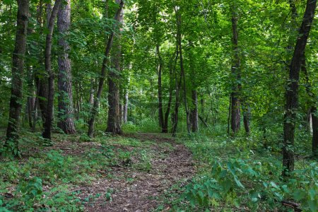 A path in forest