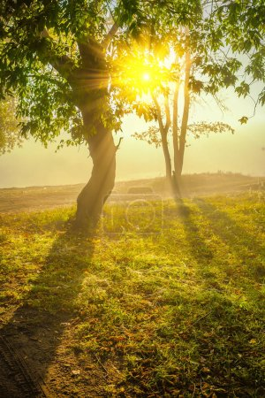 Photo for Sunrise on the edge of forest. - Royalty Free Image