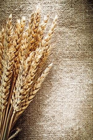 Golden wheat ears on burlap background