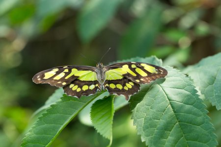 Beautiful Butterfly on leave