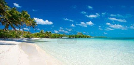 Foto de Paraíso playa tropical con palmeras y laguna azul - Imagen libre de derechos