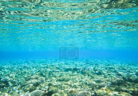 Photo for Tranquil underwater scene with copy space - Royalty Free Image