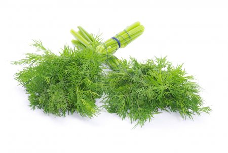 Photo for Fresh green dill on a white background - Royalty Free Image