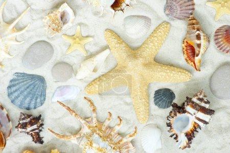 starfish and shells on beach