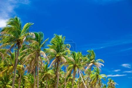 palm trees on the background