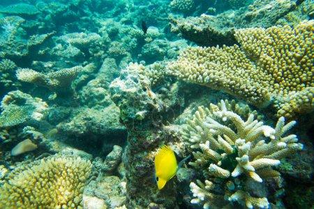 Photo pour Beau paysage sous-marin du monde avec sa flore et sa faune - image libre de droit