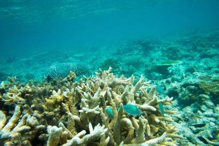 Underwater world landscape