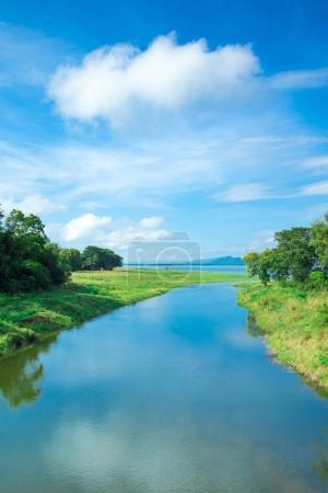 Sri Lanka Lake, Sri lanka landscape, Trees by lake