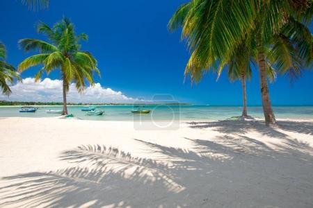 Palm trees on white sandy beach with boats