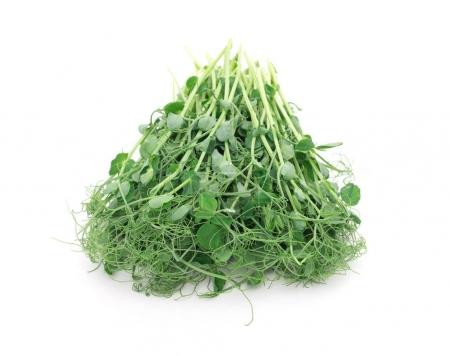 Photo for Green pea sprouts isolated on white - Royalty Free Image