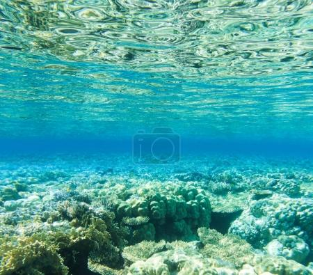 Tranquil underwater scene with copy spac