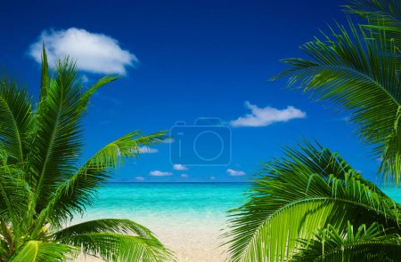 Photo for Tropical beach in Maldives - Royalty Free Image
