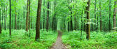 path in green forest in summer