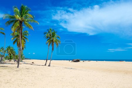 Beach with coconut palms and tropical sea.
